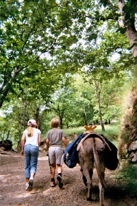 Cevennes with Salome 2005